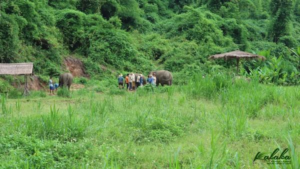 Centre éléphants à Chiang Mai