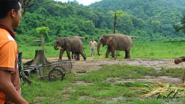 Sanctuaire éléphant à Chiang Mai